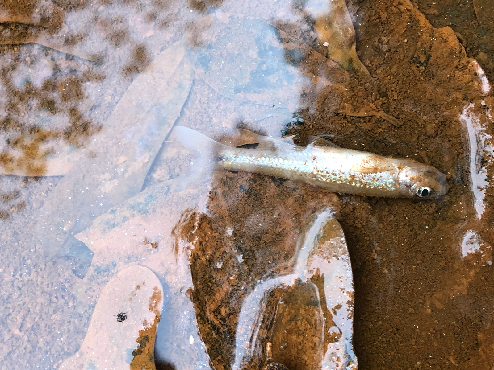 Residents along Indian Creek in northern Franklin County found stinking, black water in the creek Saturday and dead fish. It has been determined that the pollution came from runoff from fire suppressing efforts at the new energy plant on Highway 198.